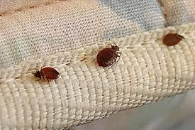 مكافحة حشرة البق بالمنزل