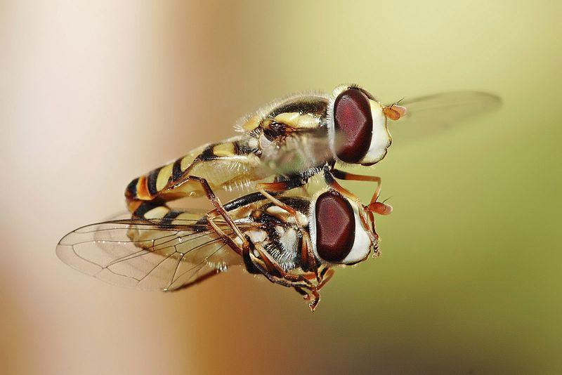 Photo of كيف تتكاثر الحشرات وهل تبيض ام تلد
