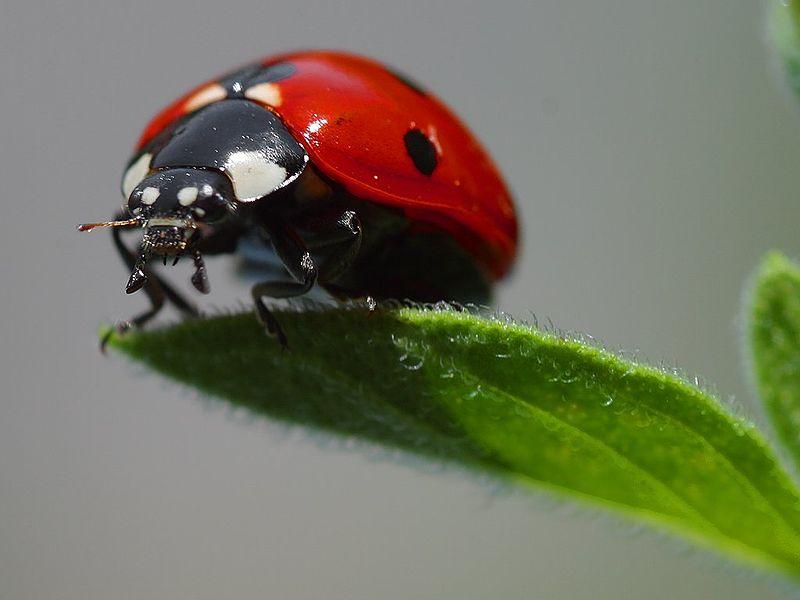 شركة ابادة حشرات بالرياض, شركة ابادة حشرات بالرياض, شركة المركز العالمي