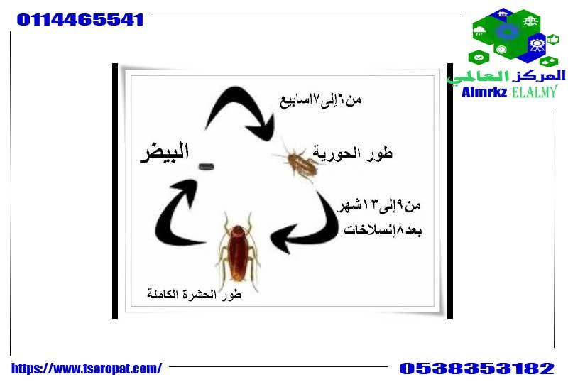 مراحل حياة الصراصير