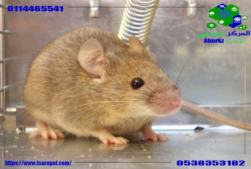 مصائد الفئران, مصائد الفئران, شركة المركز العالمي