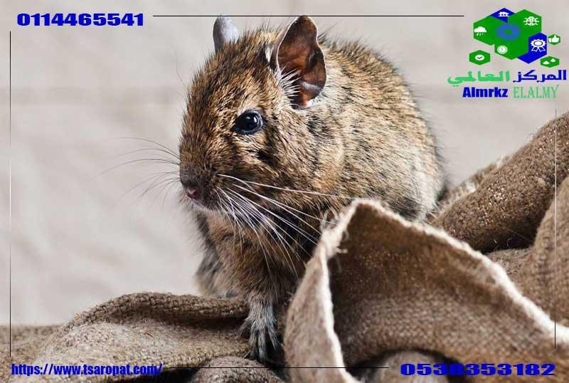 ماذا يأكل الفأر, ماذا يأكل الفأر من الطعام, شركة المركز العالمي