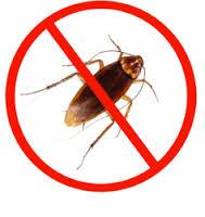 اماكن تواجد الصراصير بالمنزل, اماكن اختباء الصراصير بالمنزل الغير متوقعة, شركة المركز العالمي
