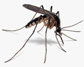 مكافحة البعوض, مكافحة البعوض, شركة المركز العالمي