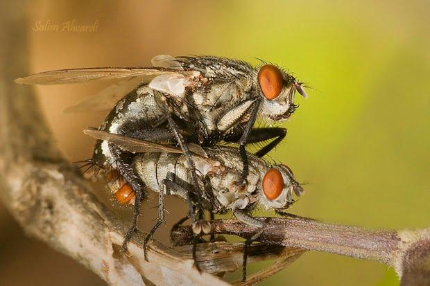 مكافحة الذباب وكيفية القضاء علي الذباب