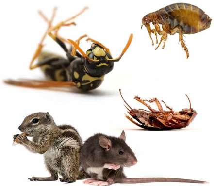 مكافحة الحشرات المنزليه