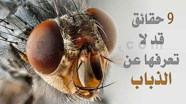 Photo of طرق التخلص من الحشرات بالمنزل نهائياً