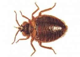 Photo of أسباب ظهور حشرة بق الفراش
