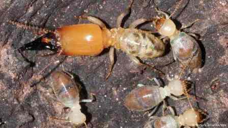Photo of افضل شركة مكافحة النمل الابيض بالرياض