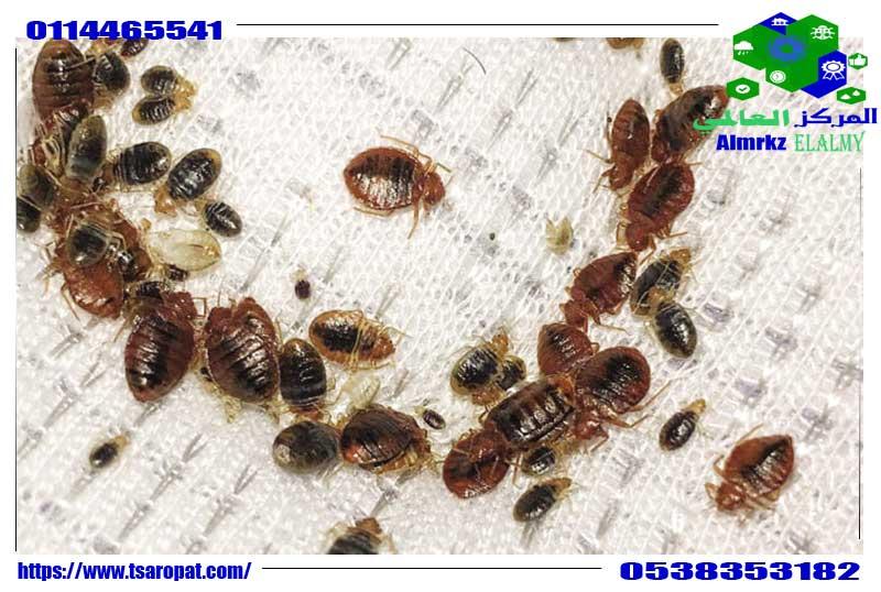 الالوان التي تجذب حشرة بق الفراش, الالوان التي تجذب حشرة بق الفراش, شركة المركز العالمي