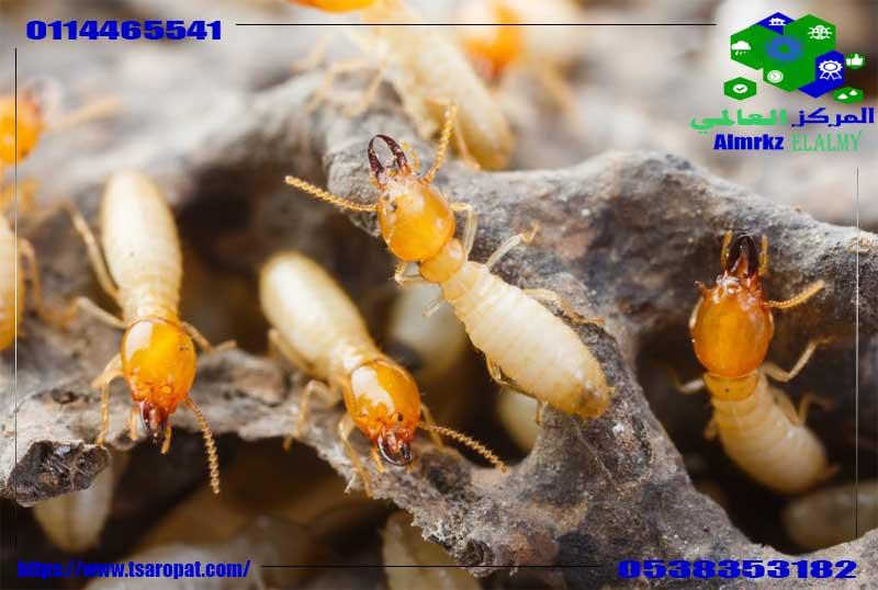 Photo of النمل الابيض