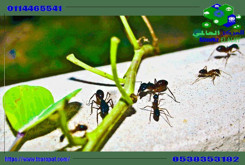 Photo of هل يمتلك النمل حاسة الشم