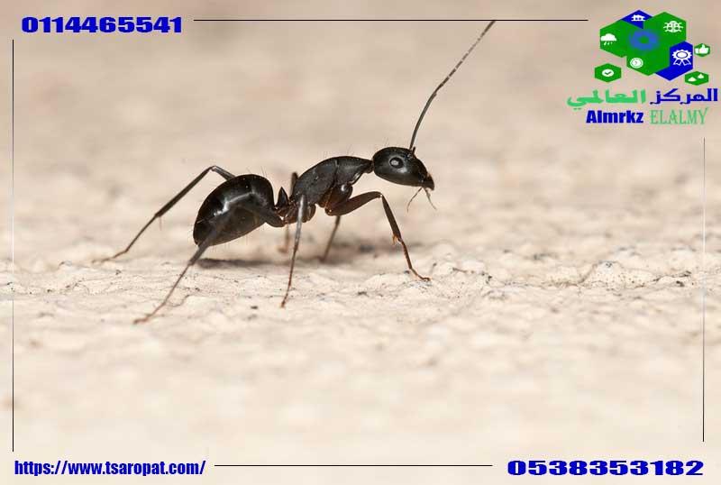 وجود النمل في الحمام, اسباب تواجد النمل بالحمامات وكيف تقضي عليها, شركة المركز العالمي