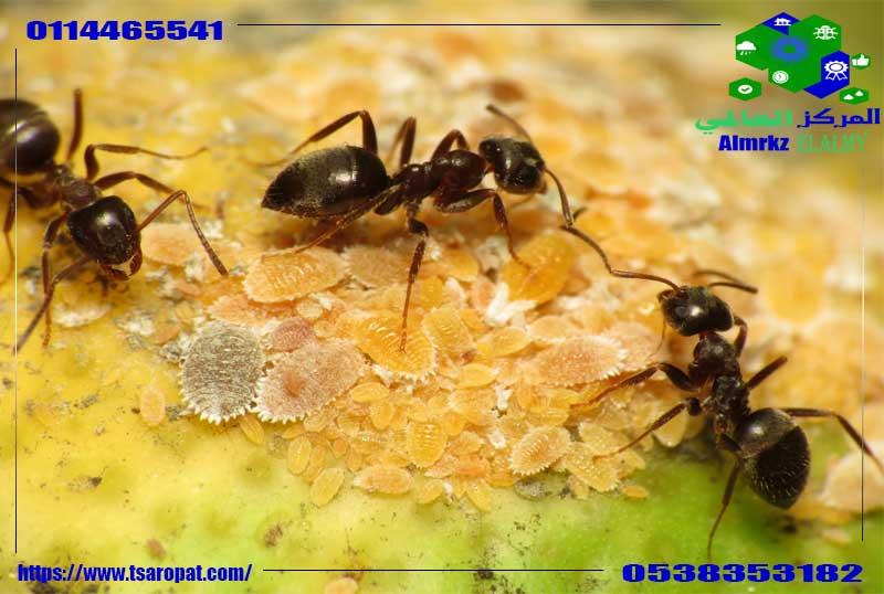 مبيدات حشرية للنمل, مبيدات حشرية للنمل, شركة المركز العالمي