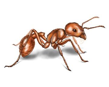 , مكافحة النمل-كيف تتحكم فى تواجد النمل, شركة المركز العالمي