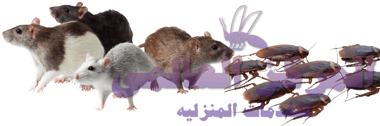 افضل شركة مكافحة الفئران شمال الرياض, افضل شركة مكافحة الفئران شمال الرياض, شركة المركز العالمي