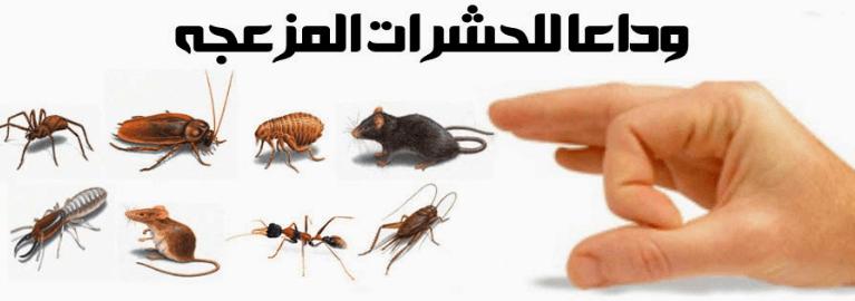 Photo of مكافحة الحشرات المنزلية بالرياض