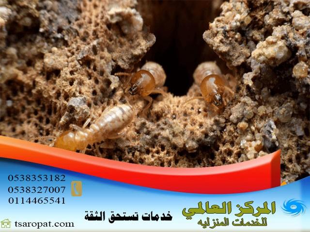 كيف يأكل النمل الابيض, كيف يأكل النمل الابيض الخشب, شركة المركز العالمي
