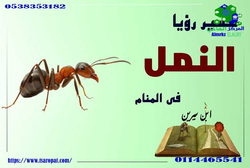 النمل الأسود فى المنام
