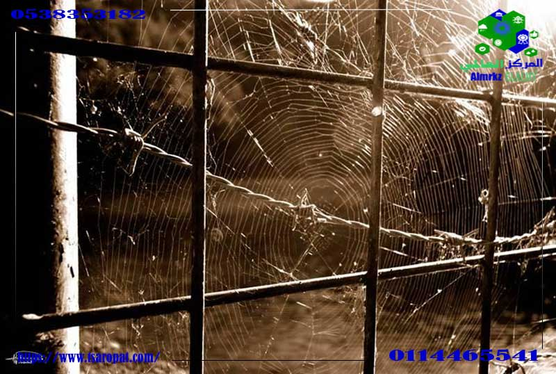 مكافحة العنكبوت