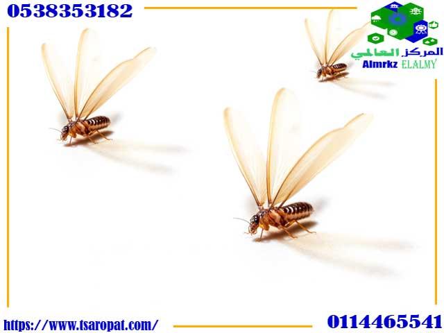 شكل النمل الابيض الطائر, شكل النمل الابيض الطائر واضرارة وطرق التخلص منة, شركة المركز العالمي