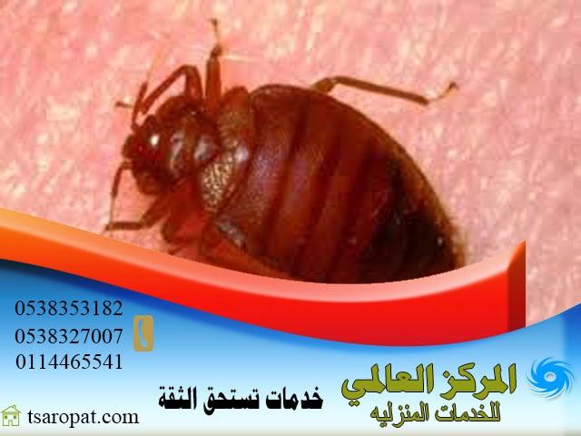 Photo of هل الشمس تقتل البق