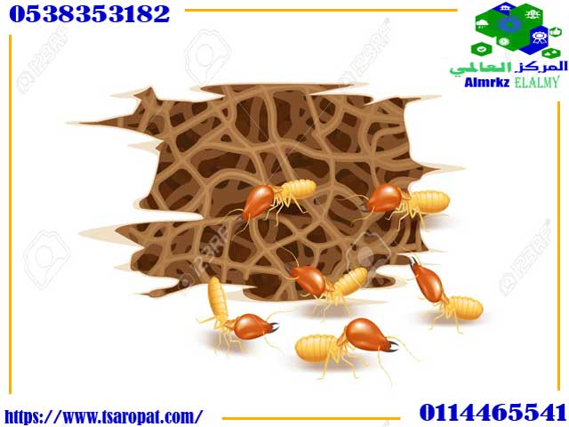 هل النمل الابيض حسد, هل النمل الابيض حسد و علامات وجود النمل الأبيض في المنزل, شركة المركز العالمي