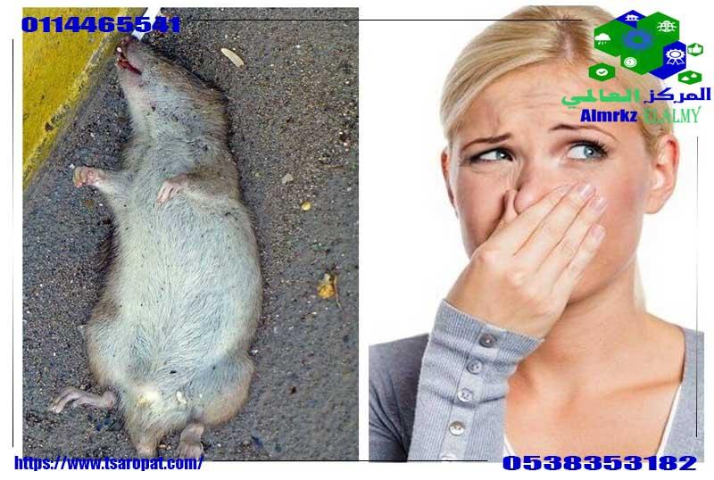 Photo of رائحة الفئران في المنزل