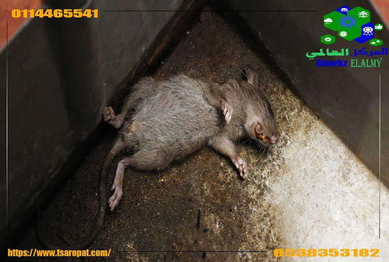 مكافحة فئران المنزل, مكافحة فئران المنزل بمبيدات المانية مضمونة وبلا اضرار, شركة المركز العالمي