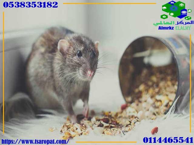 أطعمة تجذب الفئران