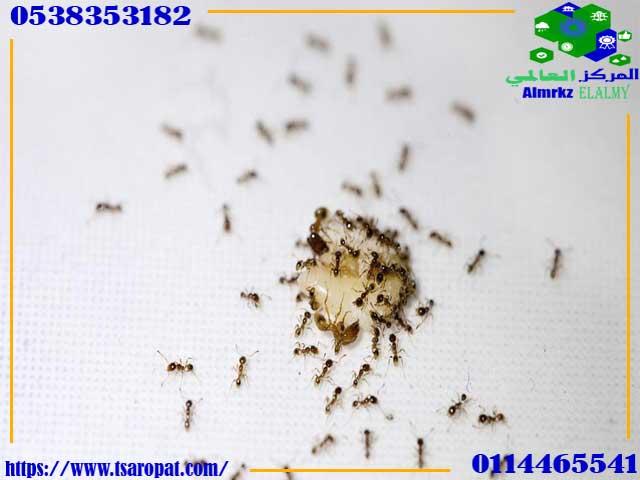 كثرة النمل الأسود في البيت, علاج الذر الاسود او النمل الاسود  في البيت, شركة المركز العالمي