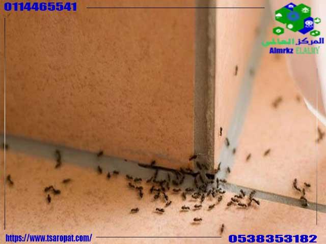 معلومات عن النمل الأسود