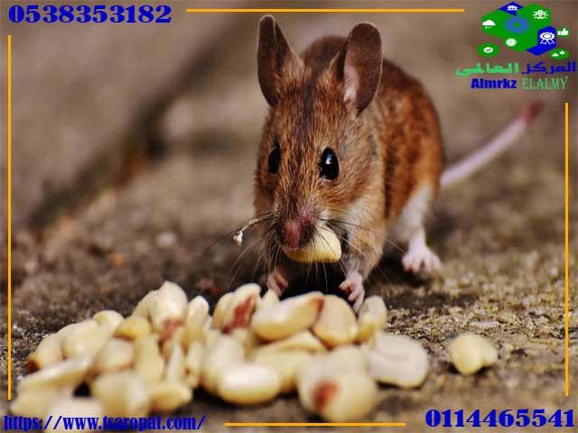 علامات وجود الفئران, علامات وجود الفئران واسباب وجودها فى المنزل, شركة المركز العالمي