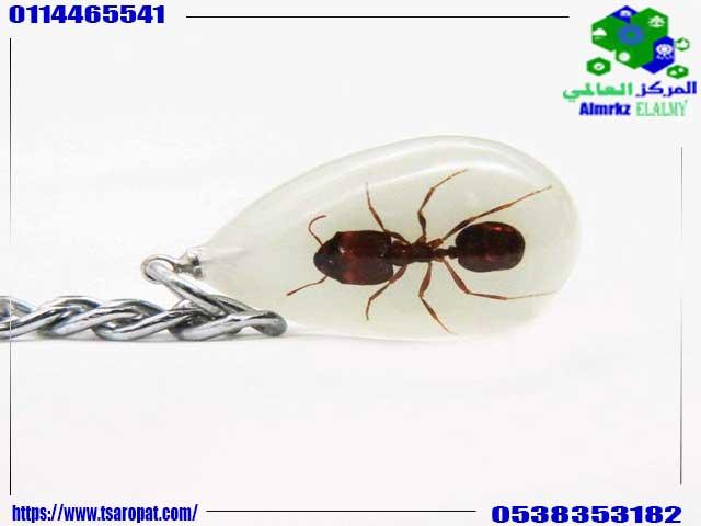 عن النمل الاسود والسحر