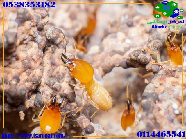 Benefits of termites