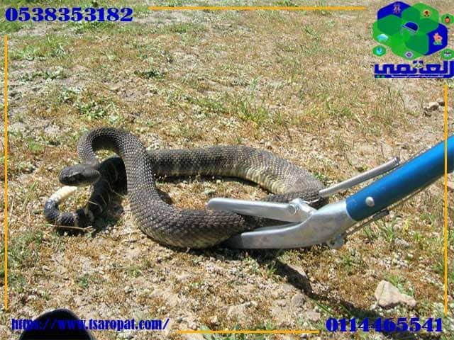 كيف تتخلص من الثعابين فى بيتك, كيف تتخلص من الثعابين فى بيتك وما هى الروائح تكرهها الثعابين, شركة المركز العالمي