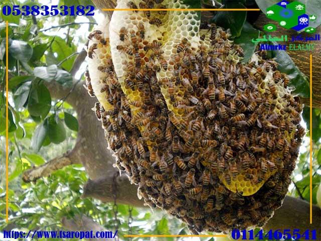 كيف يتغذى النحل, كيف يتغذى النحل, شركة المركز العالمي