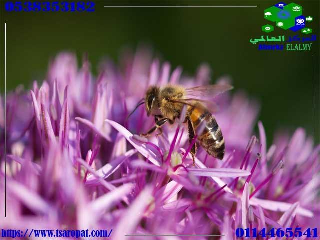 انواع النحل, انواع النحل, شركة المركز العالمي