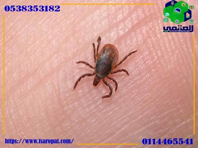 حشرة الفاش الابيض