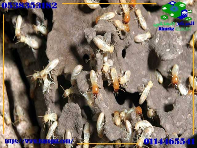 مكافحة النمل الابيض بالرياض