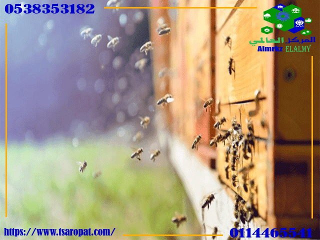أسباب شراسة النحل, ما هي أسباب شراسة النحل وطريقة تهدئة النحل الشرس؟, شركة المركز العالمي