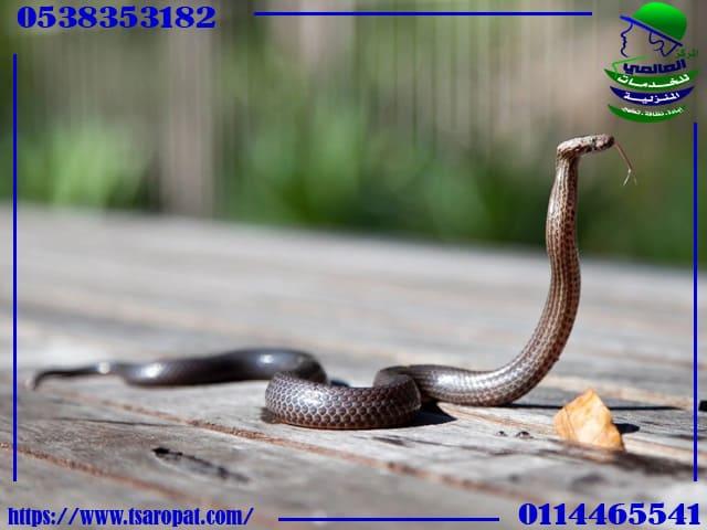 آيات من القرآن لطرد الثعابين, آيات من القرآن واهم طرق لطرد الثعابين من المنزل, شركة المركز العالمي