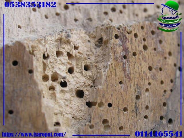 مراحل تطور النمل الأبيض, مراحل تطور النمل الأبيض ومكافحة النمل الأبيض بالرياض, شركة المركز العالمي