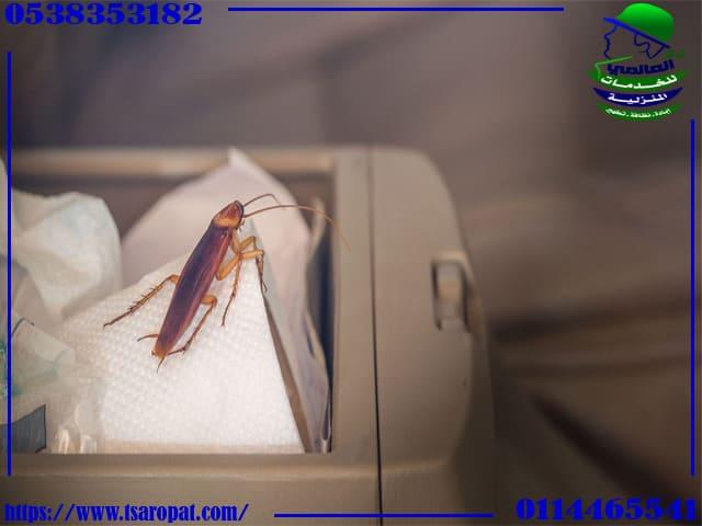 كيفية القضاء على الصراصير بدون مبيدات, كيفية القضاء على الصراصير بدون مبيدات, شركة المركز العالمي