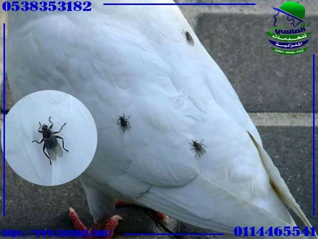 حشرات الحمام الطائر