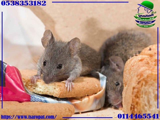 القضاء على الفئران في مواسير الصرف, القضاء على الفئران في مواسير الصرف, شركة المركز العالمي