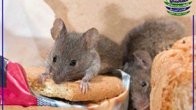 التخلص من الفئران في الحديقة, التخلص من الفئران في الحديقة, شركة المركز العالمي