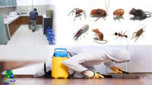 ارقام مكافحة الحشرات بالرياض, ارقام مكافحة الحشرات بالرياض ورش المبيدات للقضاء على الفئران والصراصير, شركة المركز العالمي