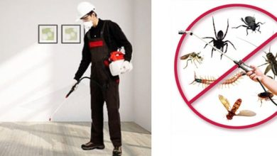 شركات مكافحة حشرات بالسعودية ومكافحة الآفات الضارة