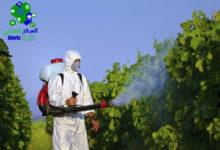 مكافحة النمل في الحدائق, مكافحة النمل في الحدائق, شركة المركز العالمي